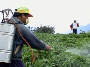 Pesticides software 4