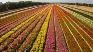 Fertilizer Shop Management Software Farming Agro 10