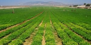 Fertilizer Shop Management Software Farming Agro 22