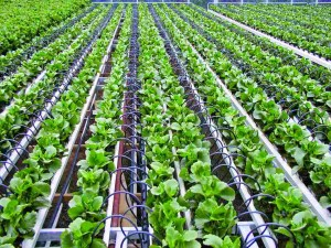 Fertilizer Shop Management Software Farming Agro 27