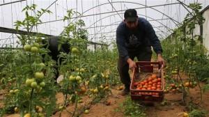 Fertilizer Shop Management Software Farming Agro 7